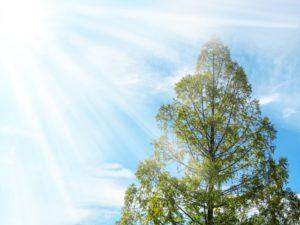 姓名判断 陽の木 甲